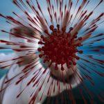 Coronavirus Corona Sars Cov   - geralt / Pixabay